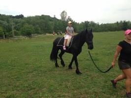 koně_11