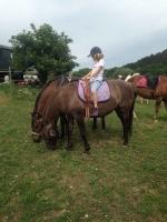 koně_1