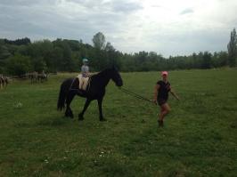 koně_20