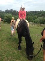 koně_21