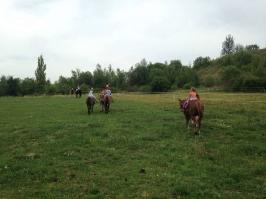 koně_22