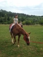 koně_24