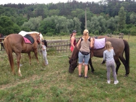 koně_27