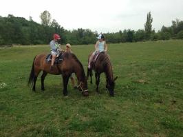 koně_32