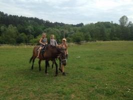 koně_8